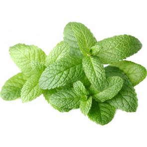 Parfum / geurolie Fresh mint